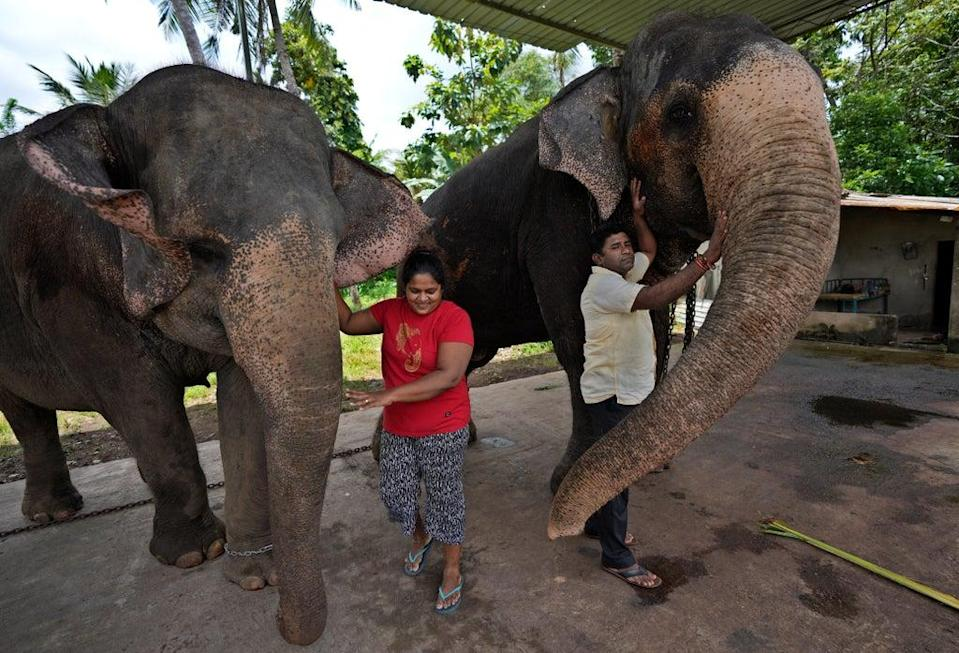 Sri Lanka Elephant Trafficking (Copyright 2021 The Associated Press. All rights reserved)
