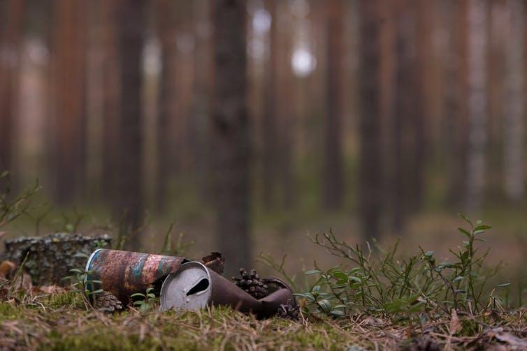 Rusty beer cans discarded in a forest.