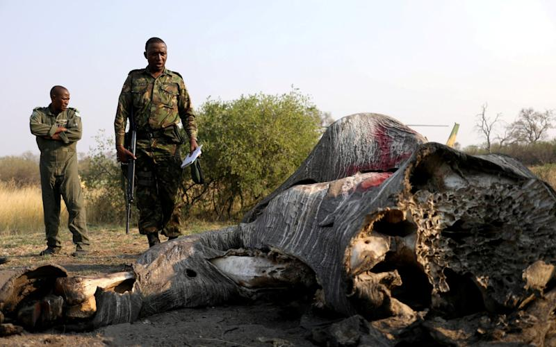 A prohibition on elephant hunting was introduced in the southern African country in 2014 - REUTERS