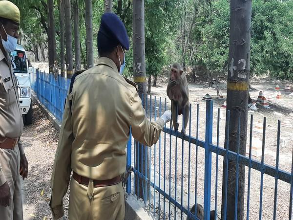 Visual of Lucknow Police helping stray animals (Photo/ANI)