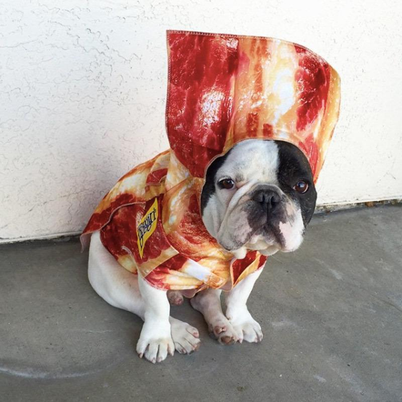 "<p>For that meathead in your life, dress them up as their all time favorite treat, BACON! The perfect costume for your favorite carnivore is <a href=""http://yahooshopping.pgpartner.com/plr.php?id=19806"" rel=""nofollow noopener"" target=""_blank"" data-ylk=""slk:here"" class=""link rapid-noclick-resp"">here</a>.</p><p><i>Photo: Instagram/@mrbobabear</i></p>"