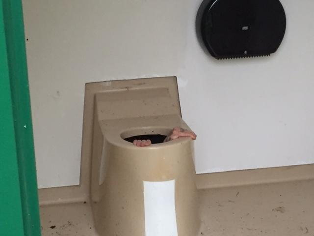 Norweigan guy gets stuck in toilet trying to save his friend's phone