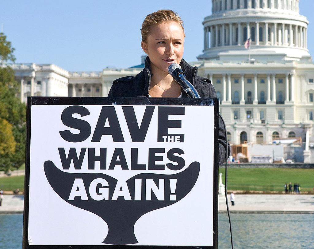 "Hayden Panettiere is one of many stars who live a green lifestyle and fight for environmental causes. For her part, the ""Heroes"" hottie has campaigned against whale hunting in Norway, Japan, and elsewhere. Paul Morigi/<a href=""http://www.wireimage.com"" target=""new"">WireImage.com</a> - October 26, 2008"