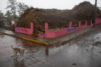 A dog stands in front of restaurant toppled by winds brought on by Hurricane Grace, in Tecolutla, Veracruz State, Mexico, Saturday, Aug. 21, 2021. Grace hit Mexico's Gulf shore as a major Category 3 storm before weakening on Saturday, drenching coastal and inland areas in its second landfall in the country in two days. (AP Photo/Felix Marquez)