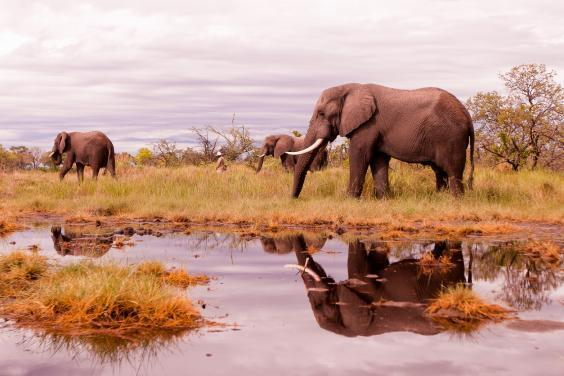 Learn to be a safari guide at Mashatu game reserve (Getty Images/iStockphoto)