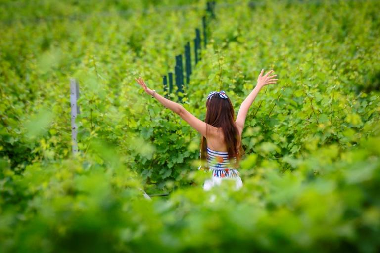 Rows of Syrah, Viognier and Chenin Blanc grapes stretch across the 40-acre GranMonte Estate in the foothills of Khao Yai National Park