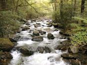 """<p>If the mountains are calling to you, head to <a href=""""https://www.tripadvisor.com/Attraction_Review-g54334-d1237729-Reviews-Jones_Gap_State_Park-Marietta_South_Carolina.html"""" rel=""""nofollow noopener"""" target=""""_blank"""" data-ylk=""""slk:Jones Gap State Park"""" class=""""link rapid-noclick-resp"""">Jones Gap State Park</a>. The mountain woodlands are very peaceful, and if you want to take a break from hiking, you can always do some trout fishing.</p><p><br><a class=""""link rapid-noclick-resp"""" href=""""https://go.redirectingat.com?id=74968X1596630&url=https%3A%2F%2Fwww.tripadvisor.com%2FAttraction_Review-g54334-d1237729-Reviews-Jones_Gap_State_Park-Marietta_South_Carolina.html&sref=https%3A%2F%2Fwww.countryliving.com%2Flife%2Ftravel%2Fg24487731%2Fbest-hikes-in-the-us%2F"""" rel=""""nofollow noopener"""" target=""""_blank"""" data-ylk=""""slk:PLAN YOUR HIKE"""">PLAN YOUR HIKE</a></p>"""