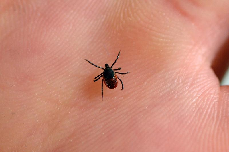 Lyme disease has been on the rise in Europe with some 200,000 new cases identified every year, according to a new study of the tick-transmitted illness