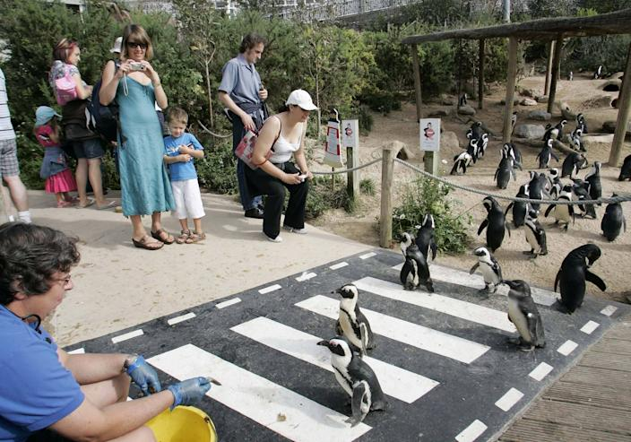 Visitors interact with the animals in the penguin enclosure at the Living Coasts. (SWNS)