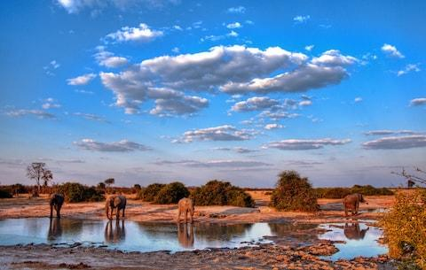 Botswana is one of Africa's top safari destinations - Credit: getty