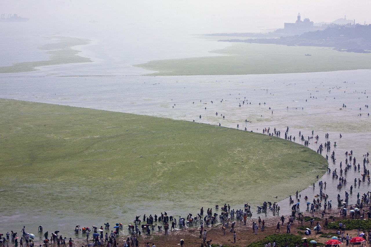 A general view shows a bathing beach where local volunteers clear away a huge new patch of algae in Qingdao, Shandong province July 6, 2008.  REUTERS/Nir Elias