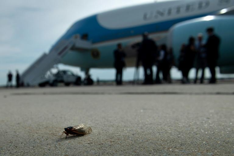 A cicada is seen on the tarmac near Air Force One at Joint Base Andrews in Maryland on June 9, 2021 as President Joe Biden prepared to leave for Europe