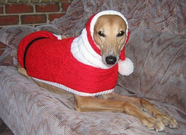 "<p>Kerry Elliman of Birmingham Greyhound Protection said, ""Jan's been absolutely amazing for us — she's saved us a lot of money that we need to spend on vet bills for our greyhounds."" <i>(Photo: Jan Brown via <a href=""https://www.facebook.com/KnittedDogClothes/photos_stream"" rel=""nofollow noopener"" target=""_blank"" data-ylk=""slk:Facebook"" class=""link rapid-noclick-resp"">Facebook</a>)</i><br></p>"
