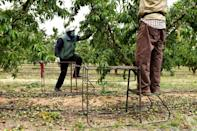 Last year the number of people who came looking for agricultural work soared as the pandemic threw many out of work