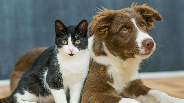 PHOTO: A puppy and a kitten sit closely to one another, patiently waiting for instruction in this undated photo. (iStockphoto/Getty Images)