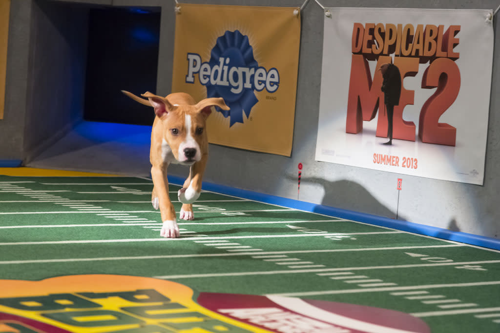 Dogs make their first enterance on the field during Puppy Bowl IX.