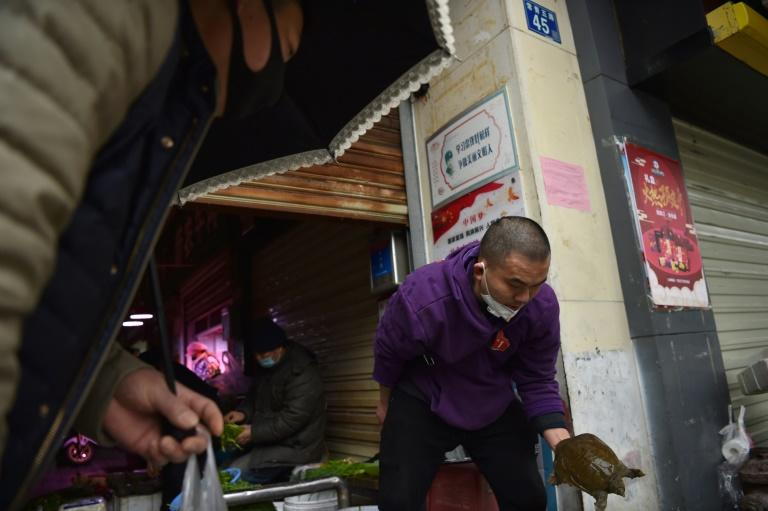 A turtle for sale at a market in Wuhan, the epicentre of a deadly new virus that came from an animal