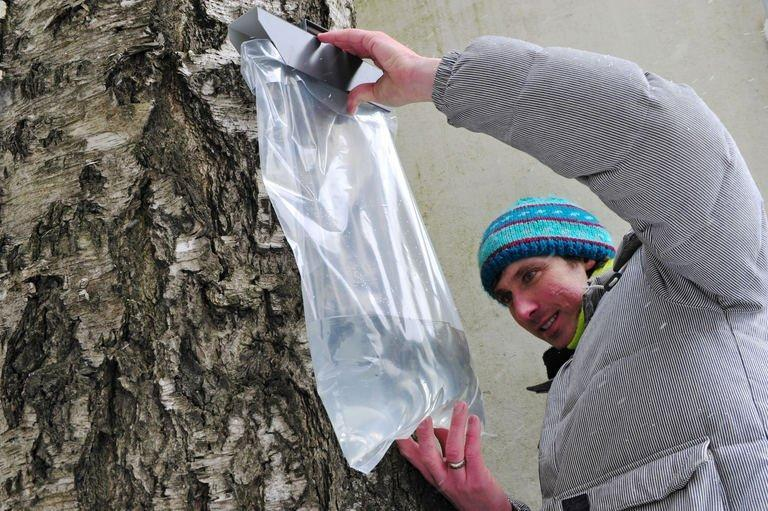 """Linards Liberts checks a birch juicing device in Riga on March 30, 2013. As spring melts away a long winter deep in Latvia's vast forests, the rising temperature heralds the start of """"berzu sula"""", or """"birch juice"""" season"""