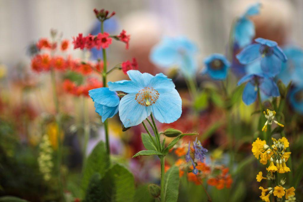 """<p><strong>What are the best British garden shows to visit in 2020? From the prestigious <a href=""""https://www.housebeautiful.com/uk/garden/a27598243/chelsea-flower-show-2020/"""" target=""""_blank"""">Chelsea Flower Show</a> to fringe events like Seedy Sunday, these gardening events are perfect for the green-fingered horticultural lover, regardless of whether you're a budding beginner or a seasoned pro.</strong></p><p>The gardening experts at <a href=""""https://www.greenhousepeople.co.uk/"""" target=""""_blank"""">The Greenhouse People</a> have given us a run-down of the best horticultural shows to visit this year, so get the diary out because spring is going to be busy... </p>"""
