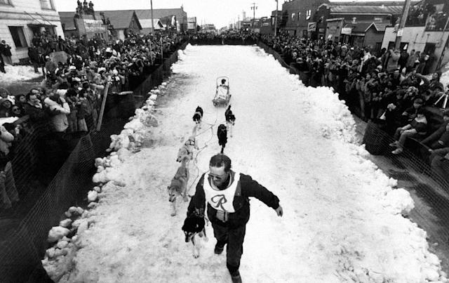 FILE - Rick Swenson leads his team the final few yards at the conclusion of the ninth annual Iditarod Sled Dog Race in Nome, Alaska, March 19, 1981. The Eureka musher won the race for the third time, covering the 969 miles from Settlers Bay, near Anchorage, to Nome in 12 days, 8 hours, 45 minutes and 2 seconds. (AP Photo, File)