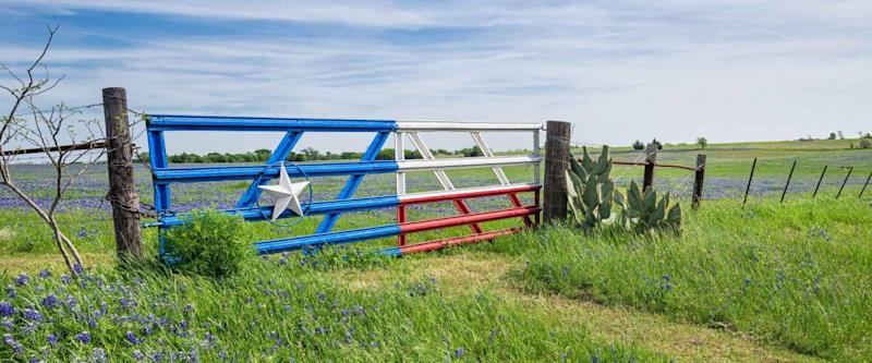 Bluebonnet field and a fence with gate along roadside in Texas spring