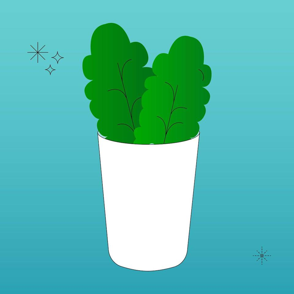 """<p>To regrow romaine and other lettuces, place the roots in a jar of water and fill with at least 1"""" of water. After a few days leaves will start to grow. At this point, transfer the roots to soil to fully thrive. </p>"""