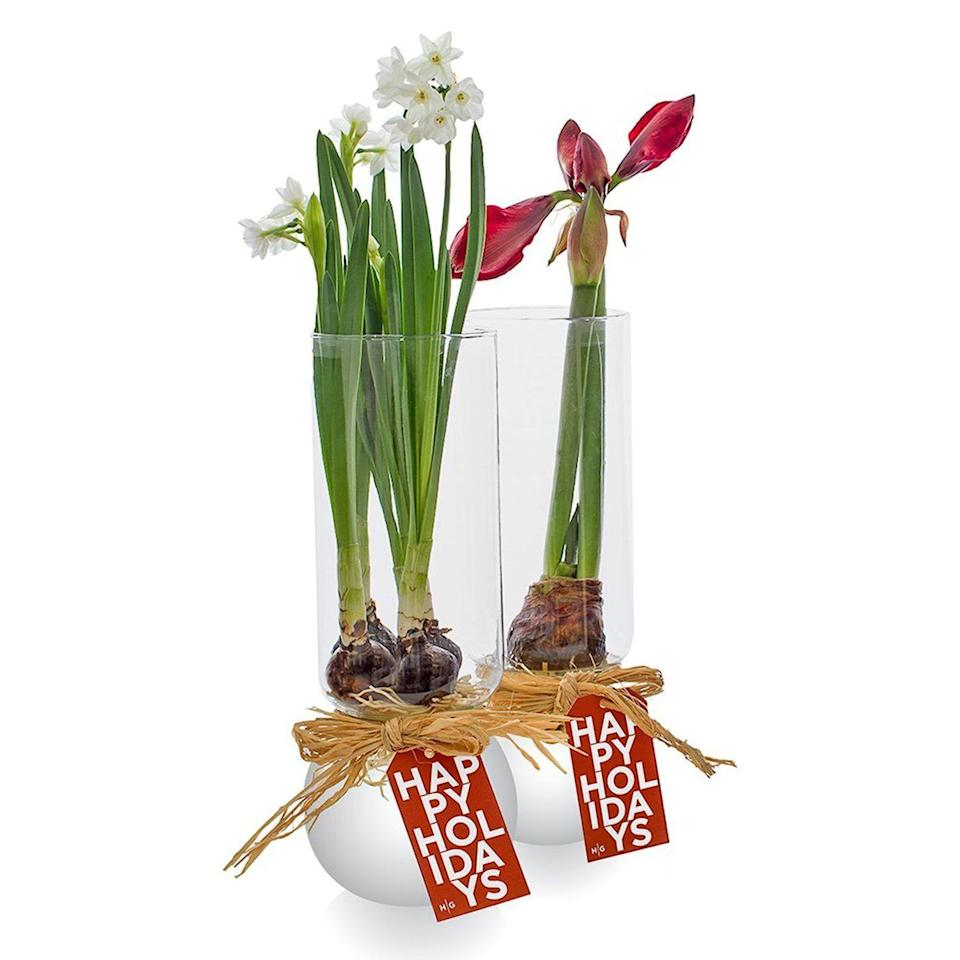 "<p>hudsongracesf.com</p><p><strong>$48.00</strong></p><p><a href=""https://hudsongracesf.com/products/4-paperwhites-in-bulb-vase?variant=30326150791250&gclid=Cj0KCQiAtqL-BRC0ARIsAF4K3WGFHDbOCxPyN6qcqEVWiqv69ma7wpDrib_UJqBhDWMf6cyJJOawAQwaAi8UEALw_wcB"" rel=""nofollow noopener"" target=""_blank"" data-ylk=""slk:Shop Now"" class=""link rapid-noclick-resp"">Shop Now</a></p>"