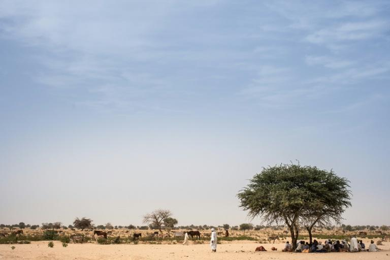 Farmers shelter under a mango tree to avoid the heat and sun on the road between Adre and Farchana, in eastern Chad in March 2019 (AFP Photo/Amaury HAUCHARD)