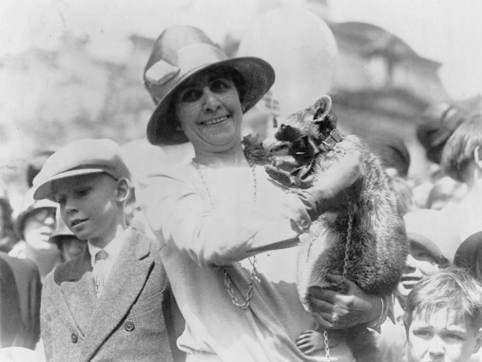 white house racoon grace coolidge