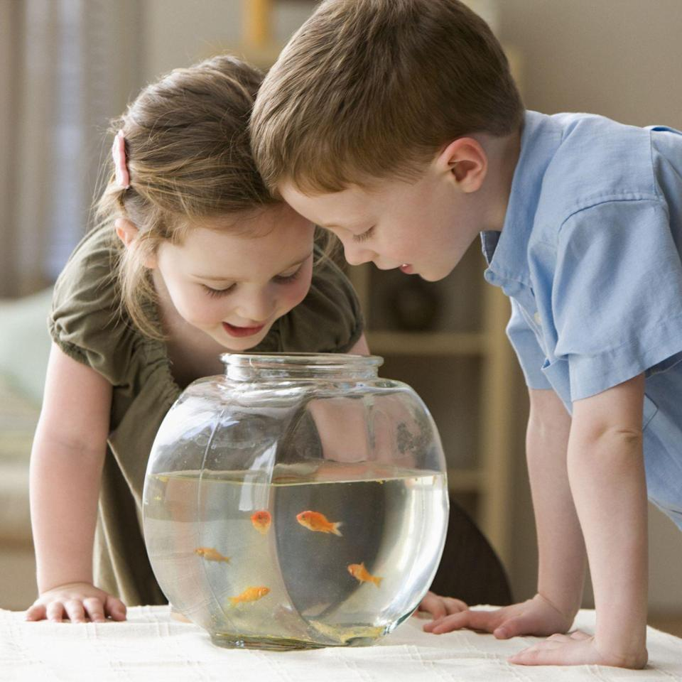 """<p>Fish are the perfect starter pets for small children, because they can fit just about anywhere in their rooms, don't need much attention, and can teach them important skills outside of school. </p><p>""""To properly care for a fish requires some chemistry knowledge to create the right water requirements and temperature for the needs of a fish,"""" Bales says. So, if your children are interested in science, this might be the best pet for them! They'll have to do their research on what kind of water, food, and other types of fish can go in their tank, but it's a learning experience everyday.</p>"""