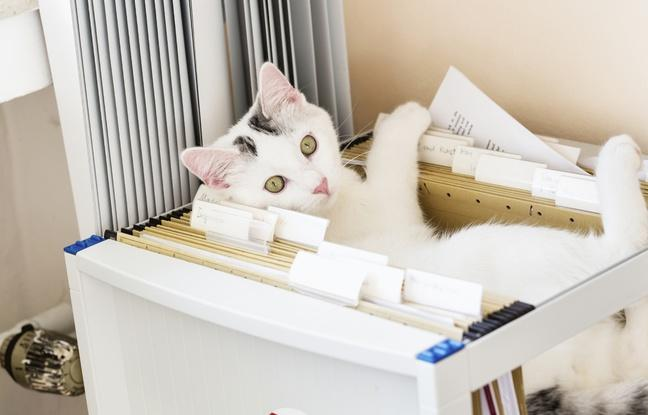 Vie de bureau : Peut-on amener son animal au travail ?