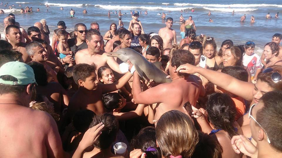 "<p>The selfie craze has entered a new low. An young, endangered dolphin died after beachgoers apparently pulled it from the sea to take photos with it.</p> <p>Last week, a tourist staying at the Santa Teresita beach resort in Argentina reportedly picked up two Franciscana dolphins from the water. A huge crowd of people gathered around the dolphins and began taking photos with the animals. Unfortunately, one of the dolphins quickly overheated and passed away while it was out of the water.</p> <p>After the dolphin died, it was still being passed around by beachgoers and it was later left abandoned in the sand. <a href=""https://www.facebook.com/hernan.coria.5/posts/10209159512495075"" rel=""nofollow noopener"" target=""_blank"" data-ylk=""slk:Hernan Coria"" class=""link rapid-noclick-resp"">Hernan Coria</a> shared a few images on Facebook showing the two mammals being held while tourists are seen smiling and completely unaware of what is happening to the animal.</p> <blockquote> <p>No le saques fotos. Ayudalo a volver al agua Estas situaciones pueden llevar a su muerte <a href=""https://t.co/TUDboTBzdZ"" rel=""nofollow noopener"" target=""_blank"" data-ylk=""slk:https://t.co/TUDboTBzdZ"" class=""link rapid-noclick-resp"">https://t.co/TUDboTBzdZ</a> <a href=""https://t.co/feZMG4oFCJ"" rel=""nofollow noopener"" target=""_blank"" data-ylk=""slk:pic.twitter.com/feZMG4oFCJ"" class=""link rapid-noclick-resp"">pic.twitter.com/feZMG4oFCJ</a></p> <p>— Vida Silvestre (@Vida_Silvestre) <a href=""https://twitter.com/Vida_Silvestre/status/699767226732130305"" rel=""nofollow noopener"" target=""_blank"" data-ylk=""slk:February 17, 2016"" class=""link rapid-noclick-resp"">February 17, 2016</a></p></blockquote>  <p>Shortly after the images surfaced, the <a href=""http://www.vidasilvestre.org.ar/sala_redaccion/?14420/Delfines-franciscanas-cada-uno-cuenta"" rel=""nofollow noopener"" target=""_blank"" data-ylk=""slk:Argentine Wildlife Foundation"" class=""link rapid-noclick-resp"">Argentine Wildlife Foundation</a> issued a warning to the general public about the endangered dolphin, hoping it can help prevent future tragedies such as this to happen.</p>   <div> <div> <blockquote><p>Segundo delfín que aparece en el día en Santa Teresita una lastima no creo que vivan</p></blockquote> </div> </div> <p>""The Franciscana [also known as La Plata], like other dolphin species, cannot survive for very long out of the water. It has thick fatty skin which provides warmth, so the hot weather will cause rapid dehydration and death,"" said a representative on the website. ""At least one of the animals [from the photos taken in Santa Teresita] died. The incident prompts us to inform the public about the urgent need to return these dolphins to the sea if one is found on the shore. It is vital to help rescue these animals, because every Franciscana counts.""</p> <p><strong>Related</strong>: <a href=""http://www.digitaltrends.com/cool-tech/dolphin-echolocation-diver/"" rel=""nofollow noopener"" target=""_blank"" data-ylk=""slk:Eerie diver image allegedly reveals how dolphins see with sound"" class=""link rapid-noclick-resp"">Eerie diver image allegedly reveals how dolphins see with sound</a></p> <p>The Franciscana dolphin is one of the smallest and rarest dolphins in the world. The mammal is considered to be ""vulnerable to extinction,"" with only 30,000 believed to be roaming in the wild.</p>"