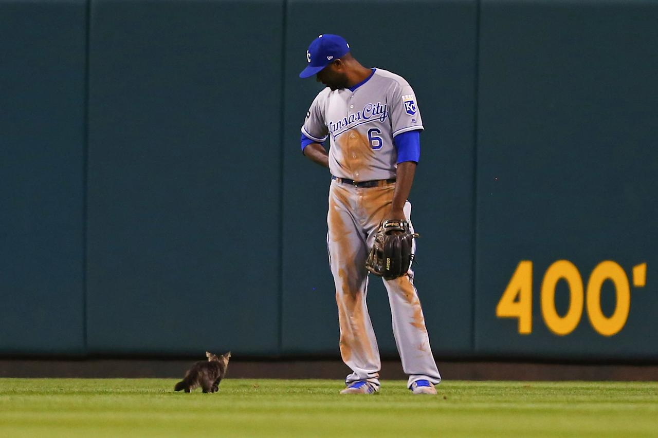 <p>Lorenzo Cain #6 of the Kansas City Royals watches a kitten run across the outfield in the sixth inning during a game against the St. Louis Cardinals at Busch Stadium on August 9, 2017 in St. Louis, Missouri. (Photo by Dilip Vishwanat/Getty Images) </p>