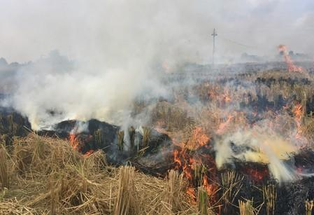 Smoke billows from paddy waste stubble as it burns in a field in Karnal district