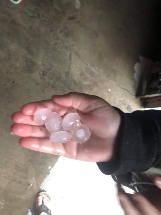 Golf ball- to marble-sized hail rained down over the township of North Dundas, Ont., on Tuesday. The owner of Zollinger Farms says its soybean and corn crops won't be able to be harvested this fall because of the damage. (Dave Zollinger - image credit)