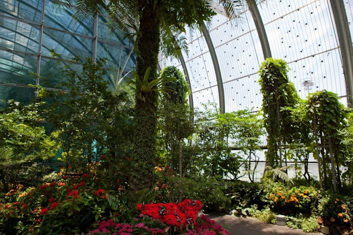 """The airport's butterfly garden is designed to be a tropical nature retreat for passengers. <span class=""""copyright"""">(John S. Lander / LightRocket)</span>"""