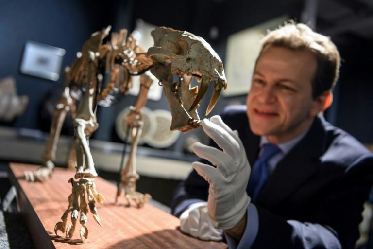 'This fossil is exceptional,' says Bernard Piguet of the auction house selling it