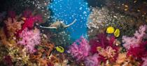 """<p>A sea turtle swims through an active coral reef. Believe it or not, coral reefs are the <a href=""""https://reefci.com/2017/08/11/5-amazing-facts-about-coral-reefs/"""" rel=""""nofollow noopener"""" target=""""_blank"""" data-ylk=""""slk:largest biological structures"""" class=""""link rapid-noclick-resp"""">largest biological structures</a> on the planet.</p>"""