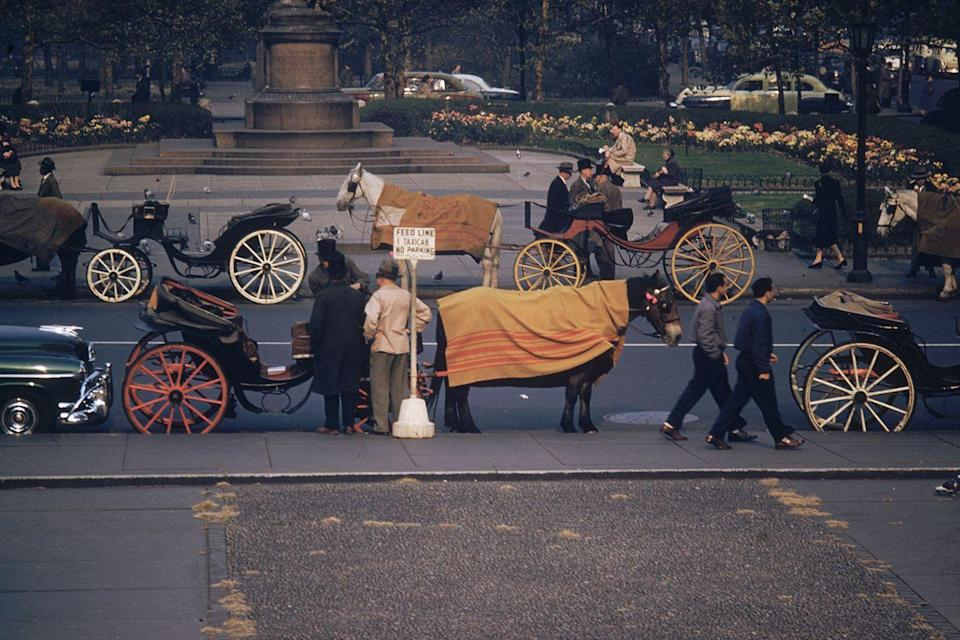 <p>Horse-drawn carriages line 59th Street in New York City, waiting for a fare. </p>
