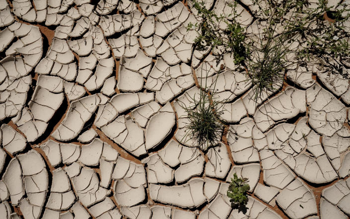 Brine-covered soil cracks as it dries in the hot sun on Ashley Williams Watt's cattle ranch Friday, July 9, 2021, near Crane, Texas. The disaster unfolding on Watt's ranch offers a window into a growing problem for the oil industry and the communities and governments who are often left to clean up the mess. (AP Photo/Eric Gay)