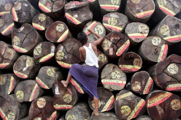 Logging in Myanmar exploded under the country's former junta as the ruling generals tossed aside sustainable forestry practices in a rush to cash in on the country's vast natural resources (AFP Photo/)