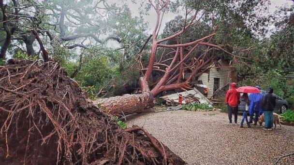 PHOTO: In this Saturday, Feb. 2, 2019, photo released by Santa Barbara County Fire, a large stone pine tree believed to be 100 years old came down into this Santa Barbara, Calif., home during Saturday's powerful winter storm. (Mike Eliason/Santa Barbara County Fire via AP)