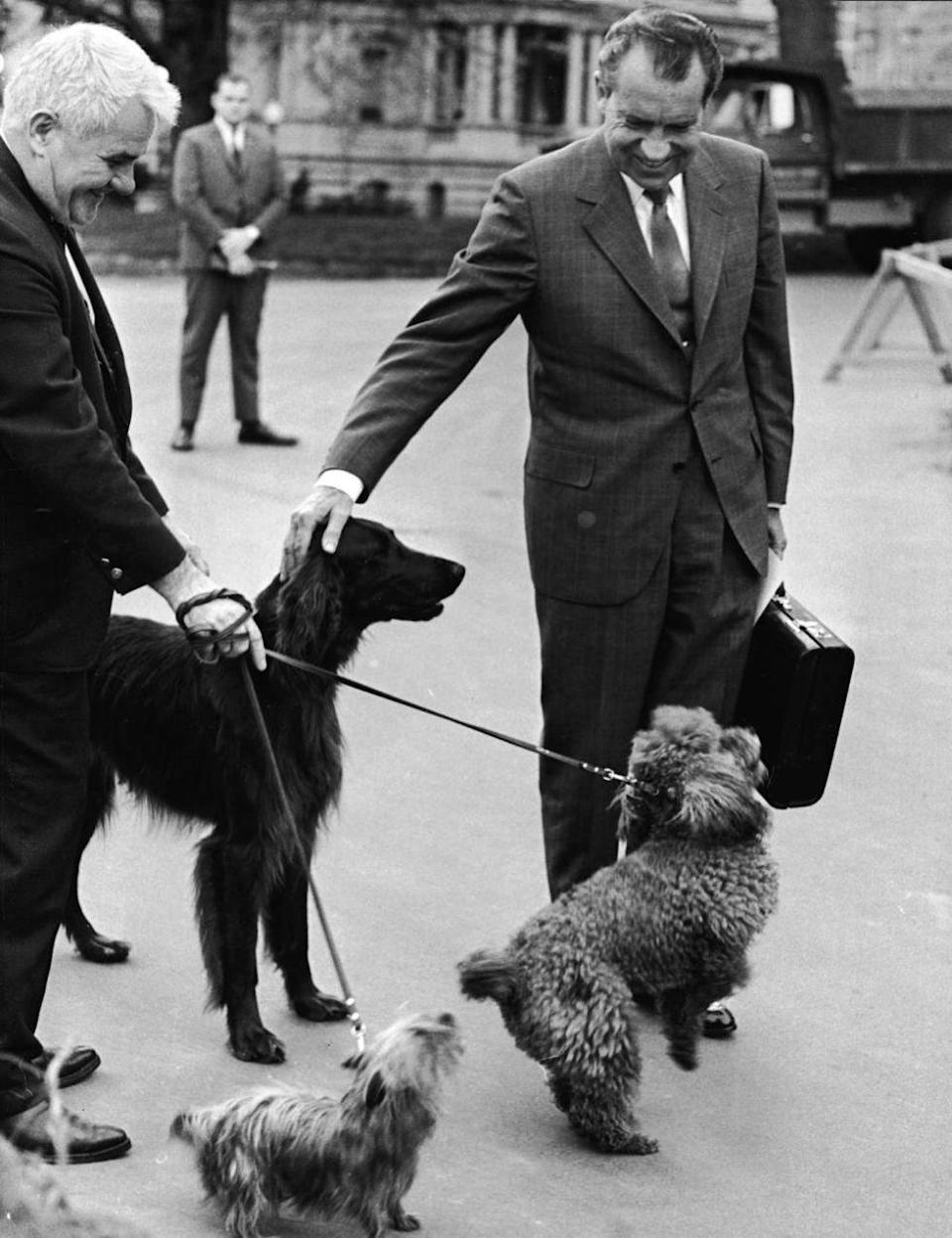 <p>President Richard M. Nixon smiles and pets his dogs: (front left to right) Irish Setter 'King Timahoe,' Yorkshire Terrier 'Pasha' and French Poodle 'Vicky,' outside the White House.</p>