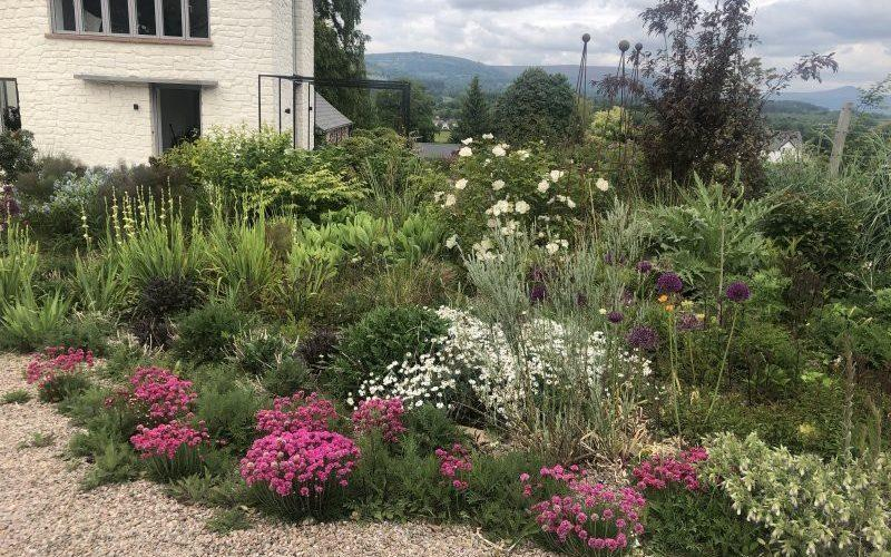 The gardens at Highfield Farm are living proof that Britain is blessed with talented amateur plants-men and women - National Garden Scheme