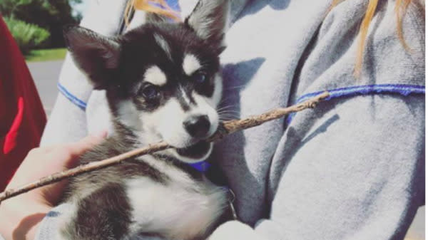 This 'Game Of Thrones' Star Just Got An Adorable New Puppy