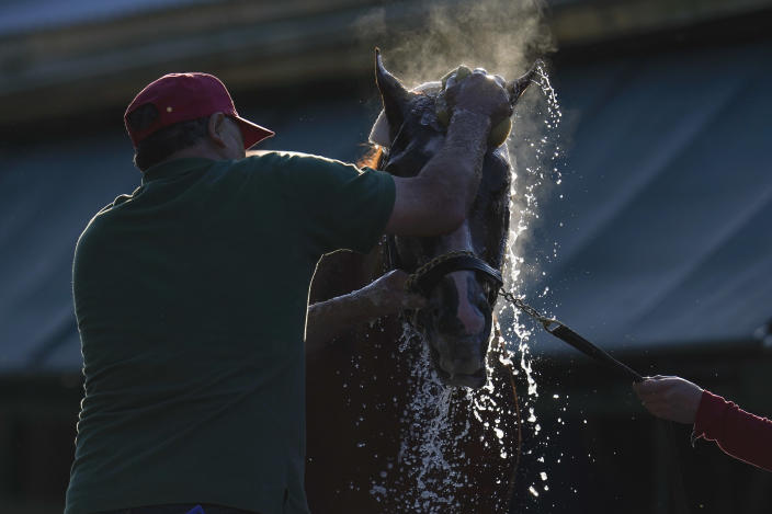 Guadalupe Guerrero gives Preakness hopeful Ram a bath after a morning exercise at Pimlico Race Course ahead of the Preakness Stakes horse race, Tuesday, May 11, 2021, in Baltimore. (AP Photo/Julio Cortez)