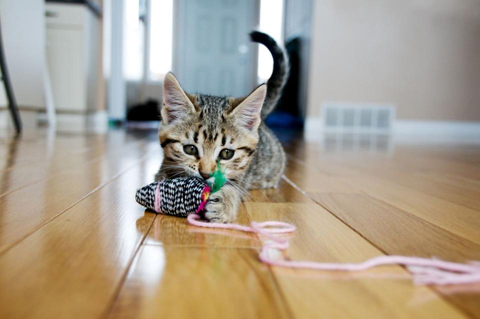 Cat owners are obsessed with this toy: 'The best money I've ever spent' (Photo: Getty Images)