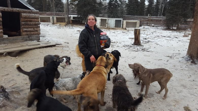 Yukon kennel owner asks court for more time to surrender dogs