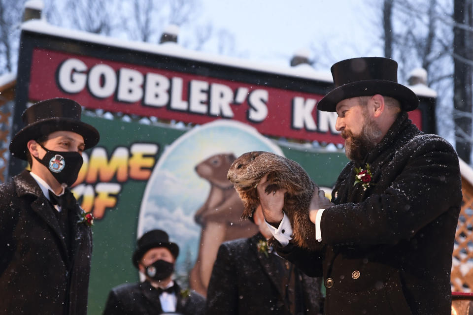 Groundhog Club handler A.J. Dereume holds Punxsutawney Phil, the weather prognosticating groundhog, during the 135th celebration of Groundhog Day on Gobbler's Knob in Punxsutawney, Pa., Tuesday, Feb. 2, 2021. Phil's handlers said that the groundhog has forecast six more weeks of winter weather during this year's event that was held without anyone in attendance due to potential COVID-19 risks. (AP Photo/Barry Reeger)