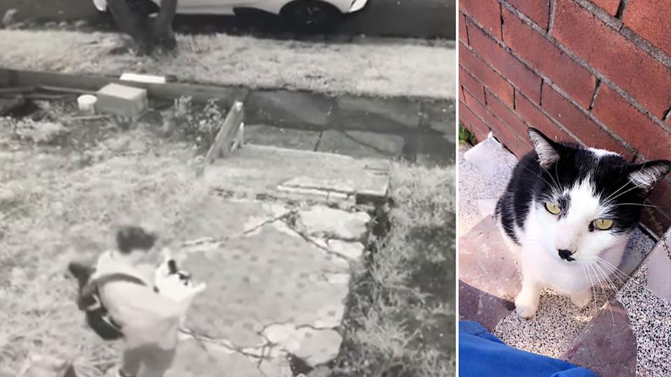 The cat was taken from the family's Dulwich Hill home on Tuesday and has not been seen since. Source: Facebook